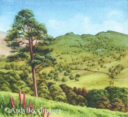 Arnison Crag from Keldas