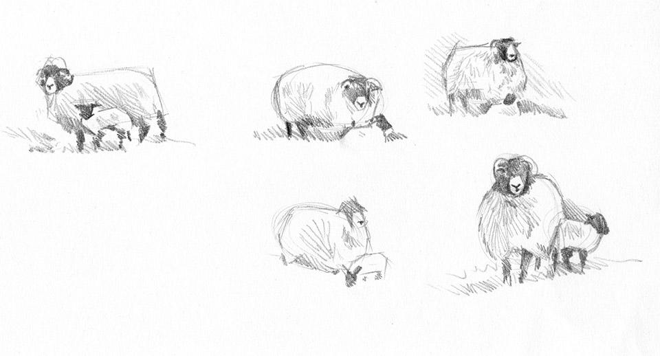 Sheep sketchbook page 1