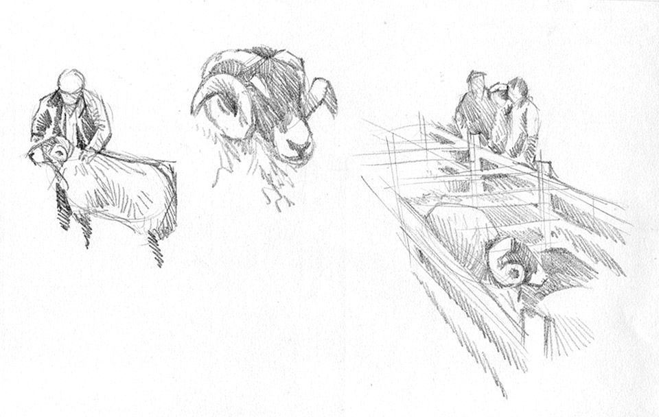 Sheep show sketchbook page 1