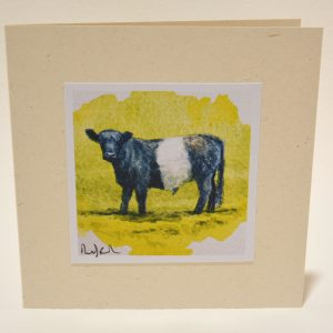 Young Beltie greeting card