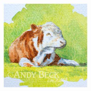 Hereford bull