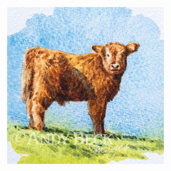 Young Highland calf