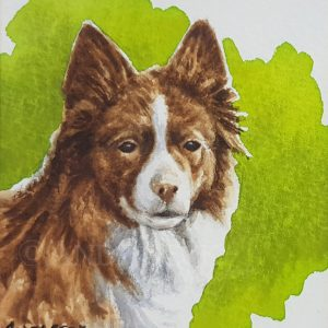 Red Collie sketch