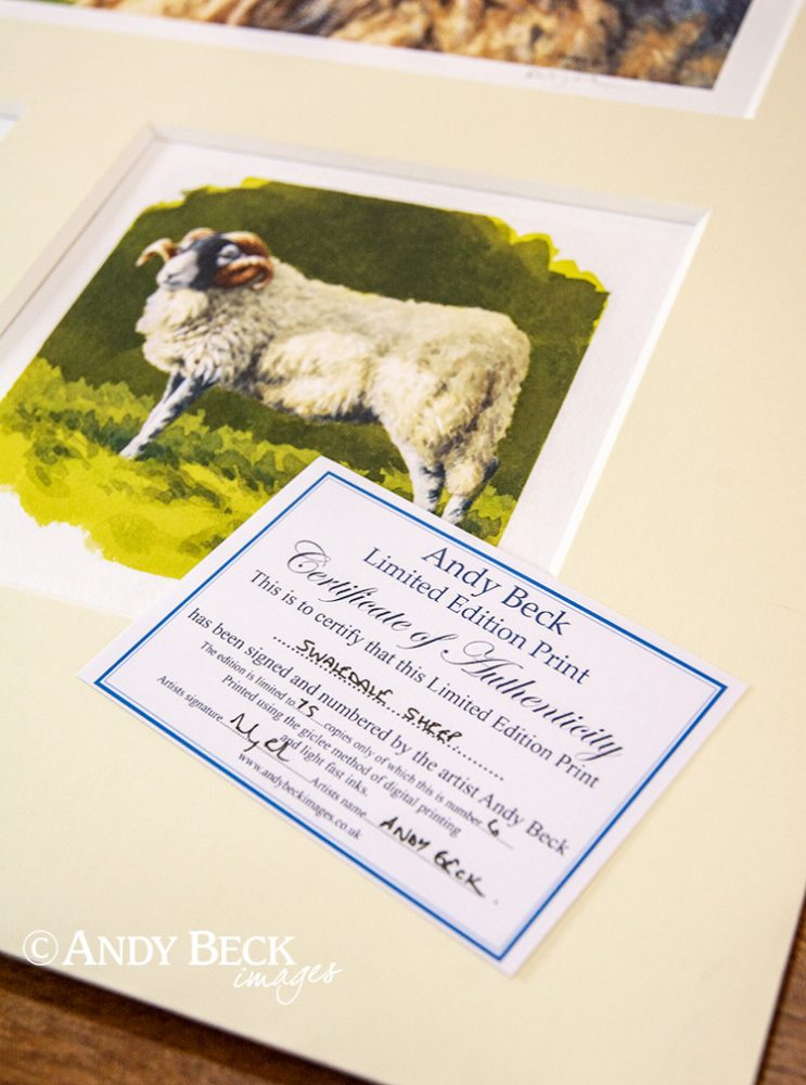 Swaledale sheep print set certificate
