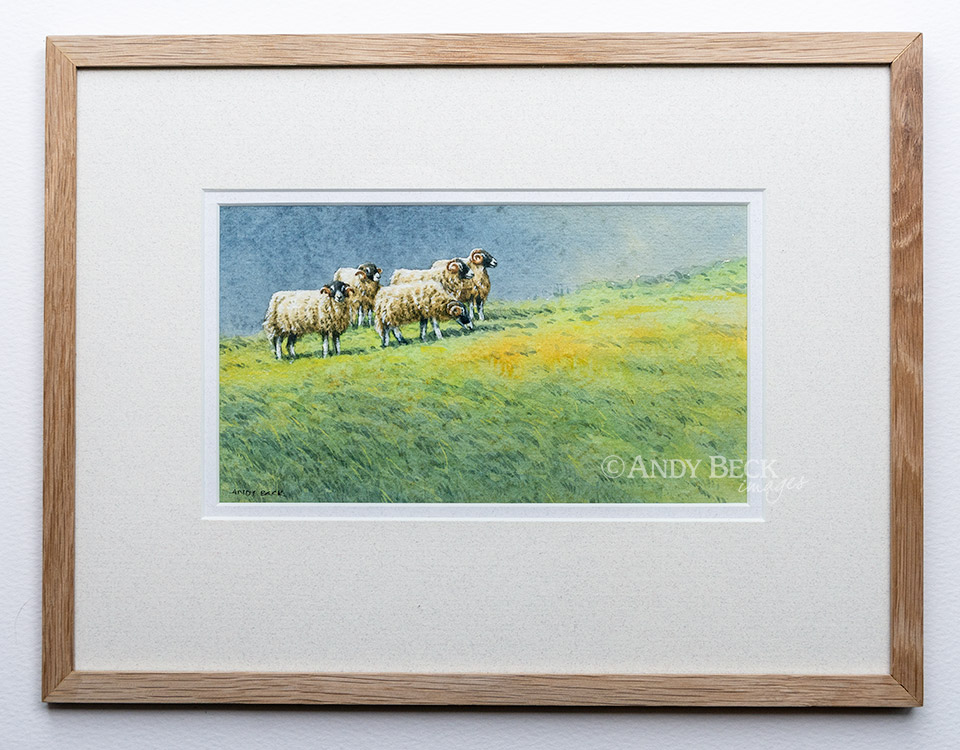 Swaledale Tups watercolour