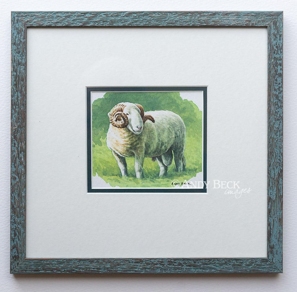 White Faced Woodand Tup framed